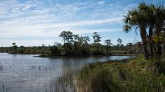 Marshland D7C_3416 (iloleo) Tags: landscape florida naplesbotanicalgardens nikon d750 scenic marsh trees palms nature