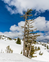 NT3.0078-PDX1700416_60534 (LDELD) Tags: oregon spring mounthood snow timberlinelodge