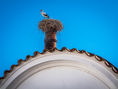 Storch in Silves (olipennell) Tags: haus portugal silves storch tier vogel faro pt house animal bird stork nature