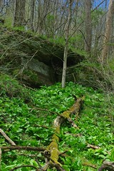 SKUNK CABBAGE AND A ROCK DEN IN CARROLL COUNTY OHIO (fstopfinatic) Tags: pentax k200d pentax1855ii overlook scene graceful mood forest tree decay moss nature landscape serene outdoor cave stone seep marsh swamp pond bog fungi lichen