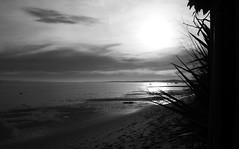 151227IMGP7753 (aureliedumartin) Tags: borddemer villages de pêcheurs cap ferret noir et blanc seaside