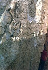 Urartu yazıtları