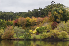 Autumn Colour (red snapper 205) Tags: autumn fall colour leaves orange yellow red green reflection adelaide mtlofty southaustralia trees landscape explore