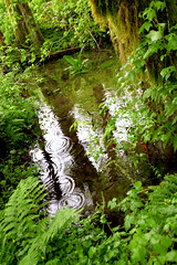 Ripple Pool (David K. Werk) Tags: plants fern reflection nature water pool forest moss woods hiking ripple calm serene wilderness