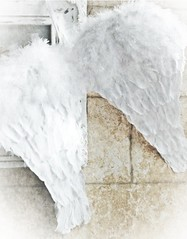 Ruffled Feathers (redsnapper!) Tags: white bird texture beauty whisper dream cream textures dreamy vanilla delicate simple wispy creamy delite whispery whisperywhitewednesday