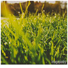 033 (imagepoetry) Tags: morning light summer green nature water grass weather yellow garden drops focus atmosphere olympus fresh f18 imagepoetry bokehlover xz1