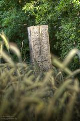 Zaun.jpg (NoBudgetPhoto.de) Tags: wood nature canon eos woods natur 365 zaun holz landschaft wald hdr pfosten tonemappedhdr 60d eos60d