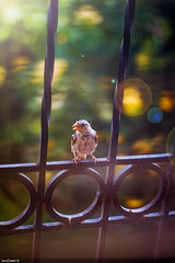 Bird (diaaearts) Tags: bird wildlife great morocco marrakech moment timing