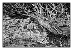 _DSF3130 1_BW (Nordtegn) Tags: spain insel ibiza cala spanien mediterranian mittelmeer carbo