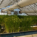 20130830_Rice Experiment Station 0162_online copy
