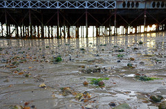 Sun under the pier (southseadave) Tags: sunset sunlight seaweed reflections sand weed pebbles portsmouth southsea southparadepier rx100 southseapier southseabeach