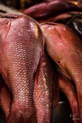 Belém out-2013-0607 (caroldantas33) Tags: mar comida feira peixe filhote pará belém pescadores veropeso peixaria pirarucú xareu aracú