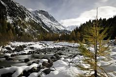 Autumn versus Winter (m_haefeli) Tags: schnee autumn winter snow schweiz switzerland nikon day suisse herbst val 1755mmf28g nikkor gletscher larch engadin lrche stmoritz d300 oberengadin pontresina morteratsch goldig diavolezza 1755mmf28d goldenerherbst nikond300