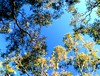 Bush Trees Deep Creek South Australia #dailyshoot (Leshaines123) Tags: light colour tree silhouette contrast creek canon eos bush flickr south deep australia explore adelaide facebook dailyshoot anawesomeshot dazzlingshot vividstriking leshaines