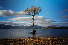 Millarochy Tree (Caledonia84) Tags: tree landscape bay scotland nd 1855mm trossachs lochlomond cliche lonetree millarochy firkinpoint mirrorless sonynex5r