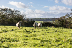 """Sheeps! (s0ulsurfing) Tags: autumn england sky cloud english nature weather clouds composition rural island countryside october scenery skies sheep natural britain farm patterns wide wideangle isleofwight british 12mm isle nube wight meteorology bembridge nephology 6d sigma1224 """"east 2013 s0ulsurfing"""