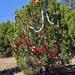 Trees_of_Loop_360_2013_195