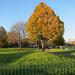 Hartington Park, Tottenham #1