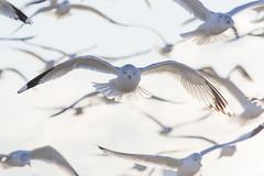 Polar Vortex Sunrise off Gravesend Bay, Brooklyn January 7, 2014 (James Prochnik Photography) Tags: seagulls newyork brooklyn gulls verycold gravesendbay polarvortex