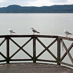 Binz (Rügen) - Schmachter See (6) thumbnail