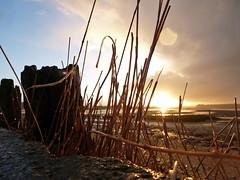 rain spots 17/365 (auroradawn61) Tags: sunset sunshine showers rain clouds coast poole sandbanks sand sea beach dorset uk england winter january lumixtz25 sunlight 365daysproject 365days 17365 grasses driftwood flickrfriday somethinggoldsomethingblue bluesky golden explored 365daysin2014