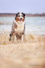 IMG_4703 (S. Elschner) Tags: dog lake see hund australien aussie shephard