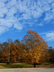 Autumn Tree with Sky