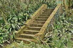 Damp steps. (dlanor smada) Tags: chilterns steps treppe greenery ferns bucks bledlow