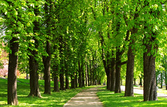 Chestnut-lined Avenue in Spring (Batikart) Tags: park city trees shadow urban plants sun sunlight black green nature grass canon germany garden way landscape outdoors deutschland vanishingpoint leaf spring flora europe day pattern stuttgart path natur pflanzen meadow wiese sunny foliage