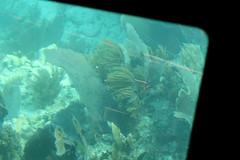 21. John Pennekamp glass bottom boat (Misty Garrick) Tags: johnpennekamp johnpennekampreef johnpennekampcoralreefstatepark coralreef florida keylargofl keylargo floridakeys atlanticocean