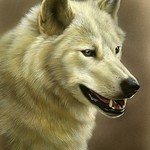 Regal Ivory III - White Wolf, watercolor and sterling silver on board, ©Rebecca Latham Hope you enjoy! ..share if you like. #art #painting #miniatureart #watercolor #realism #wildlifeart #wildlife #artoftheday #handpainted #wolf #wolves #animals thumbnail