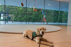 Gilroy and the sculptures of Alexander Calder (niallkennedy) Tags: gilroy sfmoma puppy