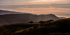 Valley Vineyard Views - explore (philipleemiller) Tags: landscape nature carmelvalley california d800 sunset pacificcoast vineyard ridges telephotopanoramas explored