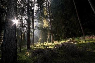 The Woods III