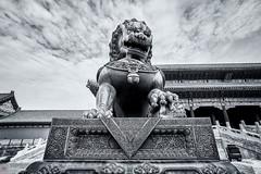 Forbidden City (Bill Thoo) Tags: forbiddencity palacemuseum beijing china monochrome blackandwhite travel landmark museum historical urban monument palace imperial emperor royal tourism sony a7rii samyang 14mm