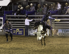 90246936941-87-Bull Riding at the Clark County Rodeo 2017-1 (Jim There's things half in shadow and in light) Tags: 2017 april canon5dmarkiv clarkcounty logandale nevada rodeo fair cowboy bullriding animal canon70200lens