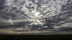 Oostvaardersplassen (Hans van der Boom) Tags: nederland netherlands ijsselmeerpolders flevopolder oostvaarderplassen animal clouds cloudscape lelystad nl