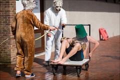 24-8039 (Ijsberen-Boom) Tags: boom ijsberen kzcyboom doop swim zwemclub zwemmen vlaanderen belgium
