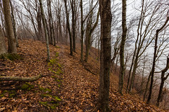 Hiking Trail - Frontenac State Park (Tony Webster) Tags: frontenac frontenacstatepark lakepepin minnesota mississippiriver earlyspring forest leaves spring statepark trees unitedstates us