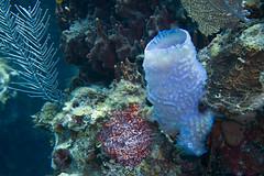 Reef biodiversity (Jeff Mitton) Tags: earthnaturelife wondersofnature