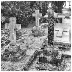Crosses, Birnam (wwshack) Tags: beatrixpotter dunkeld perthshire scotland
