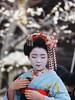Baikaisai '17 051.jpg (crazybluepanda) Tags: baikasai japan kyoto festival maiko matsuri 梅花祭 kyōtoshi kyōtofu jp