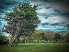 Southsea Common (MacBeales) Tags: apple iphone tree trees southampton southsea common hdr photomatix