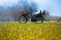 Spring Ride (Philocycler) Tags: bicycle spring canon dutchbike cargobike chicagolakefront dandelions bokeh canon5dmarkiii ef200mmf28l chicagoist jclindbikeco workcycles workcyclesfr8