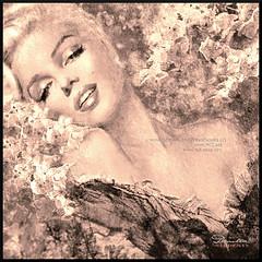 Marilyn Cherry Blossoms b sepia fb (ARTbyAngieBraun) Tags: theodanella marilynmonroe painting cherry blossoms beautiful beauty mm woman portrait sepia black white poster deco art artwork marilynart angiebraun