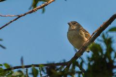 hula_lake-04 (emanuel haddad) Tags: bashir hulalake jerry majdi bird