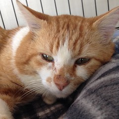 Morrison - 3 year old neutered male