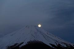 Moonset Fuji (yamanaito) Tags: 富士山 パール富士 山中湖 山梨県 月 moon moonset fuji fujisan fujiyama yamanashi
