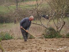 Águas Frias (Chaves) - ... cavando a terra à enxada ... (Mário Silva) Tags: águasfrias aldeia chaves trásosmontes portugal ilustrarportugal madeinportugal máriosilva abril 2017 primavera lumbudus campo cavando cavar enxada