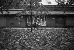 (sele3en) Tags: 35mm film analog filmphotography 35mmgraffiti saintpetersburg russia russiangraffiti saintpetersburggraffiti expired expiredfilm darkroom ilfordrapidfixer ilfotecddx dustograffiti dusto